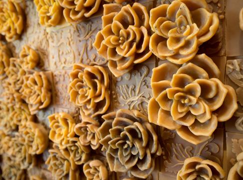 penelope stewart Daphne succulent wall2