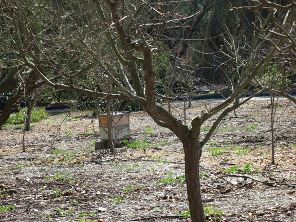 beehives in the orchard